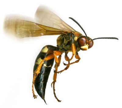 52 – Many ways to get stung